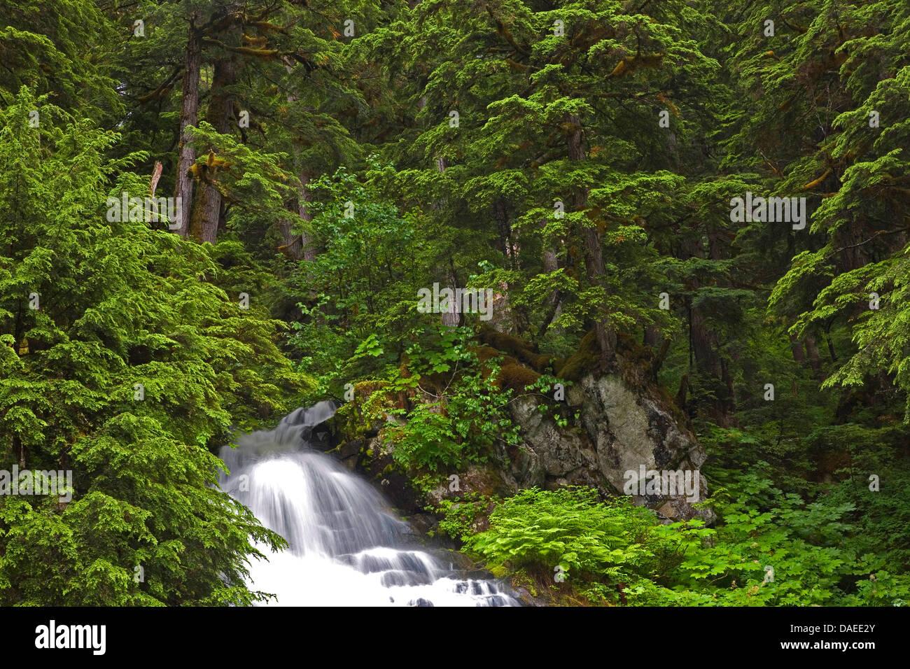 mountains waterfalls forest usa - photo #27