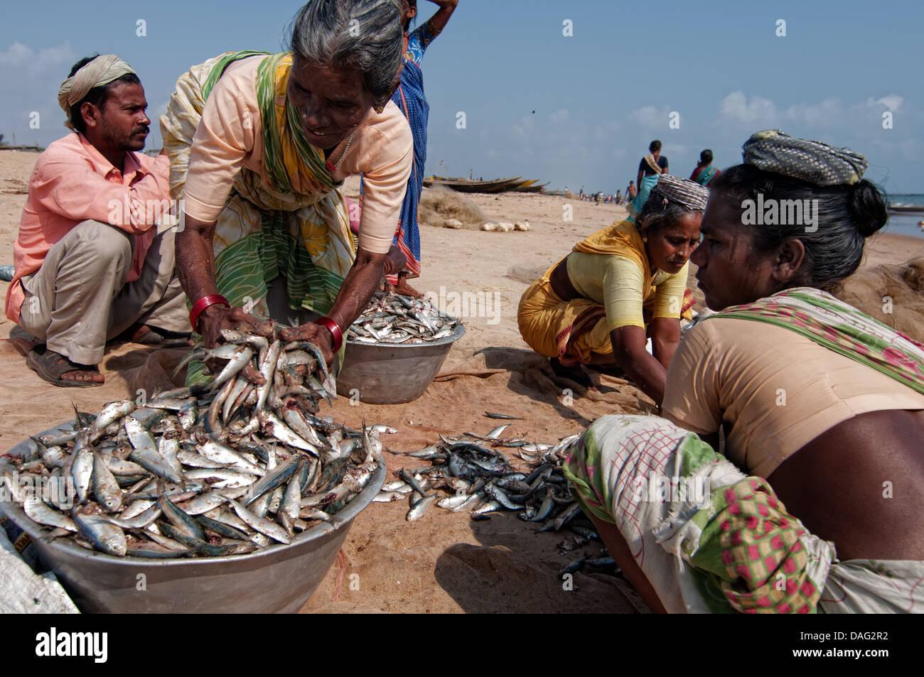 Women selling fish on the beach. Puri, Orissa, India Stock Photo ...