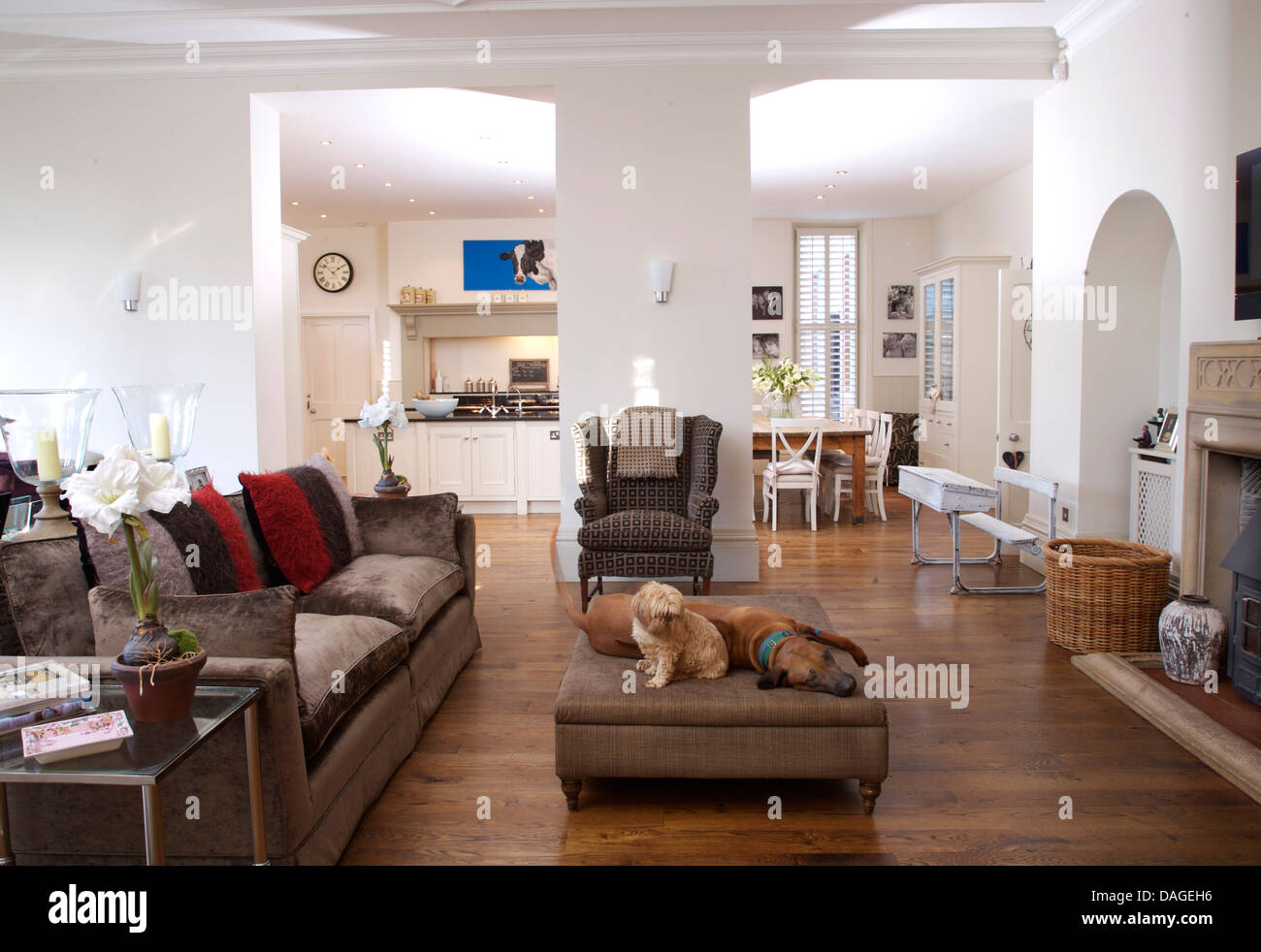 Dining room front view - Dogs Lying On Ottoman In Front Of Beige Velvet Sofa In Large Open Plan Living Room With View Of Kitchen And Dining Room