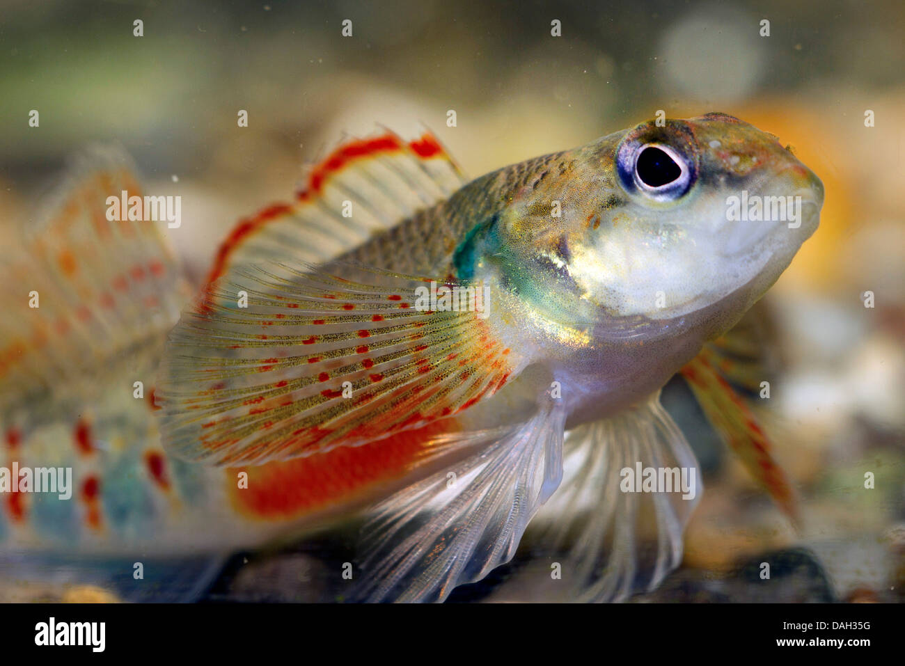 All the Presidents' fish: Five new species named after Obama ...