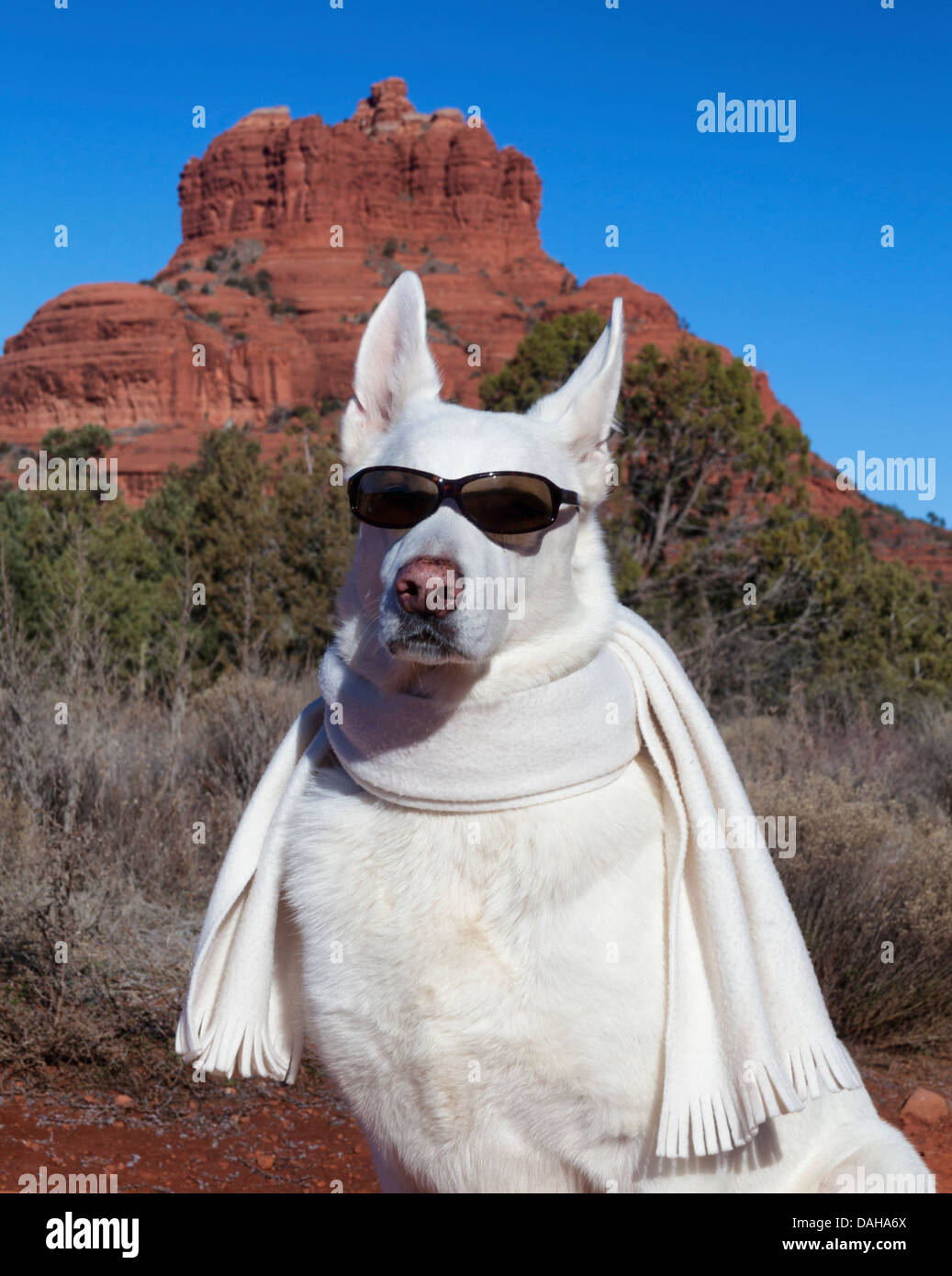 White german shepherd wearing sunglasses and scarf with for Doorbell in german