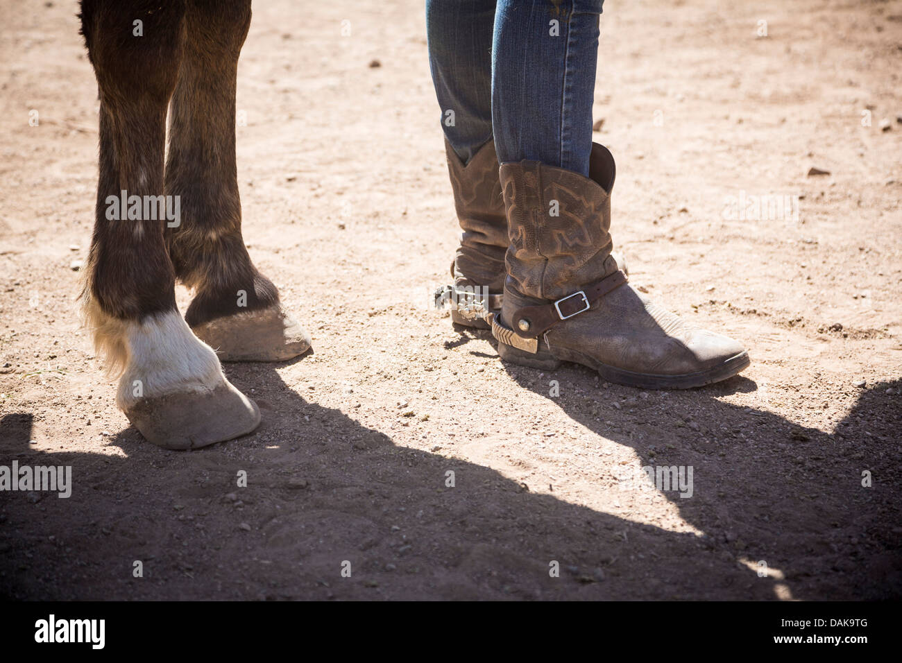 Legs of a horse and of a young woman wearing cowgirl boots ...