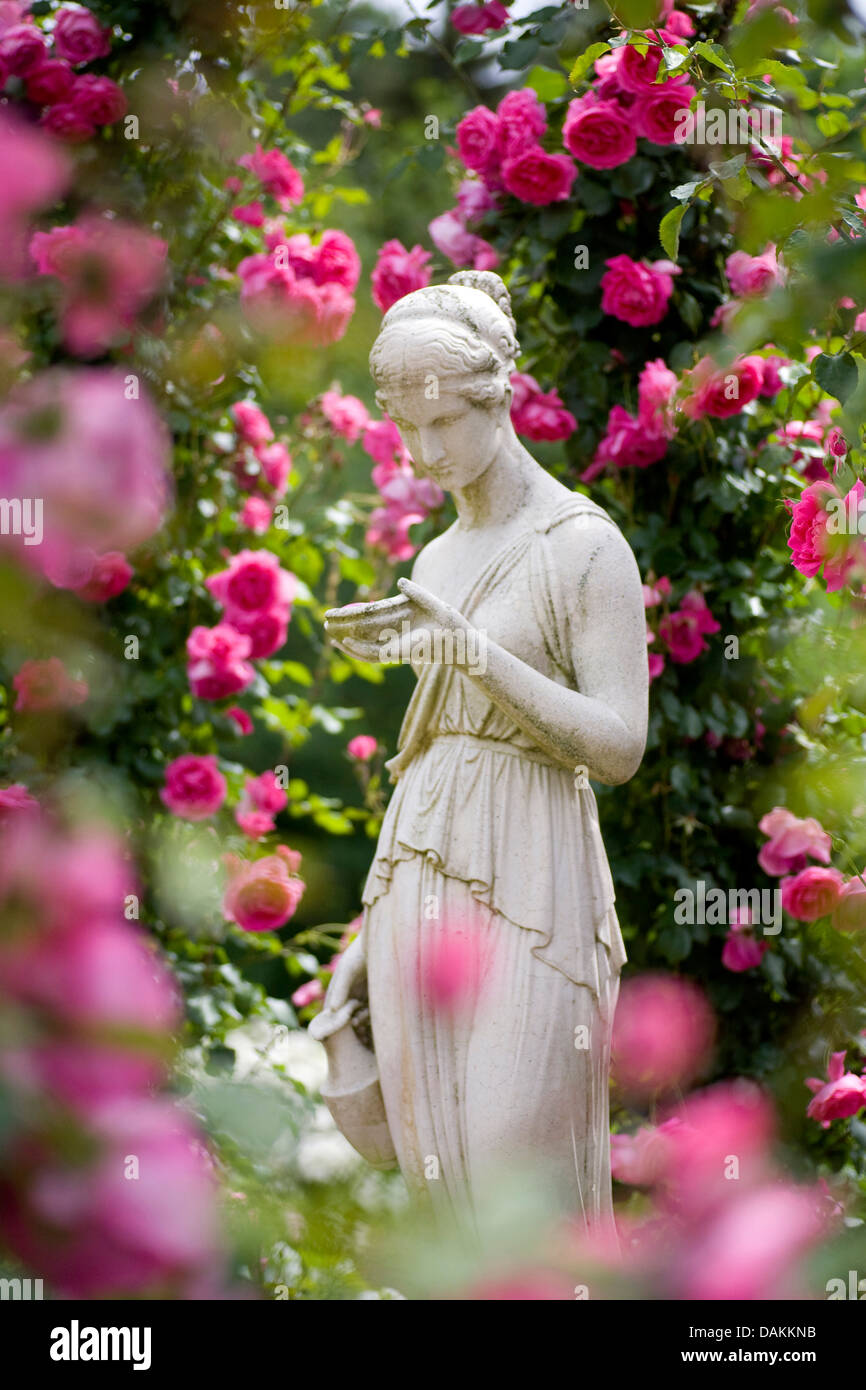 Ornamental Rose Rosa Spec Statue Of A Woman In A