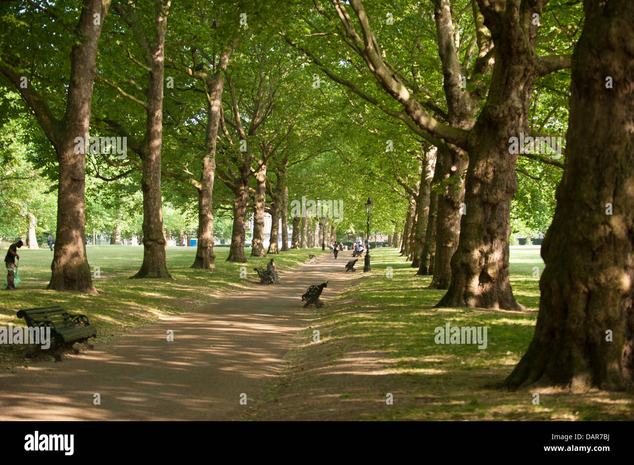 A canopy of trees gives shade in & London UK. 17th July 2013. A canopy of trees gives shade in ...
