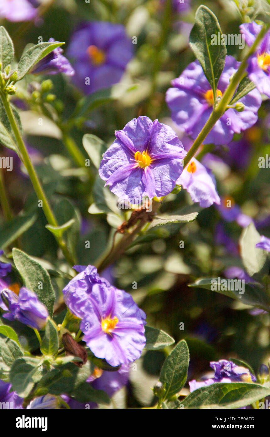 Common Garden Plants common garden plants stock photo, royalty free image: 58400845 - alamy