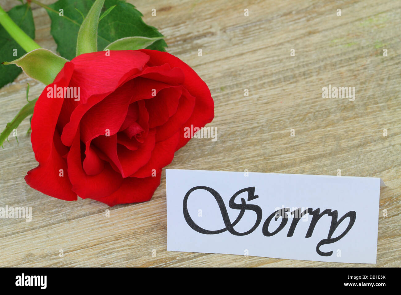 Sorry Card With Red Rose  Apology Card Messages