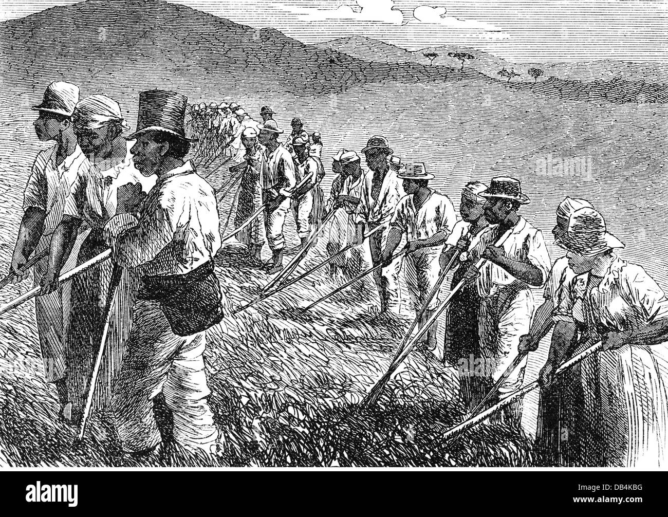 Whalers in action wood engraving published in 1855 stock illustration - Slavery Slaves At Work On A Field In Brazil Wood Engraving 2nd Half
