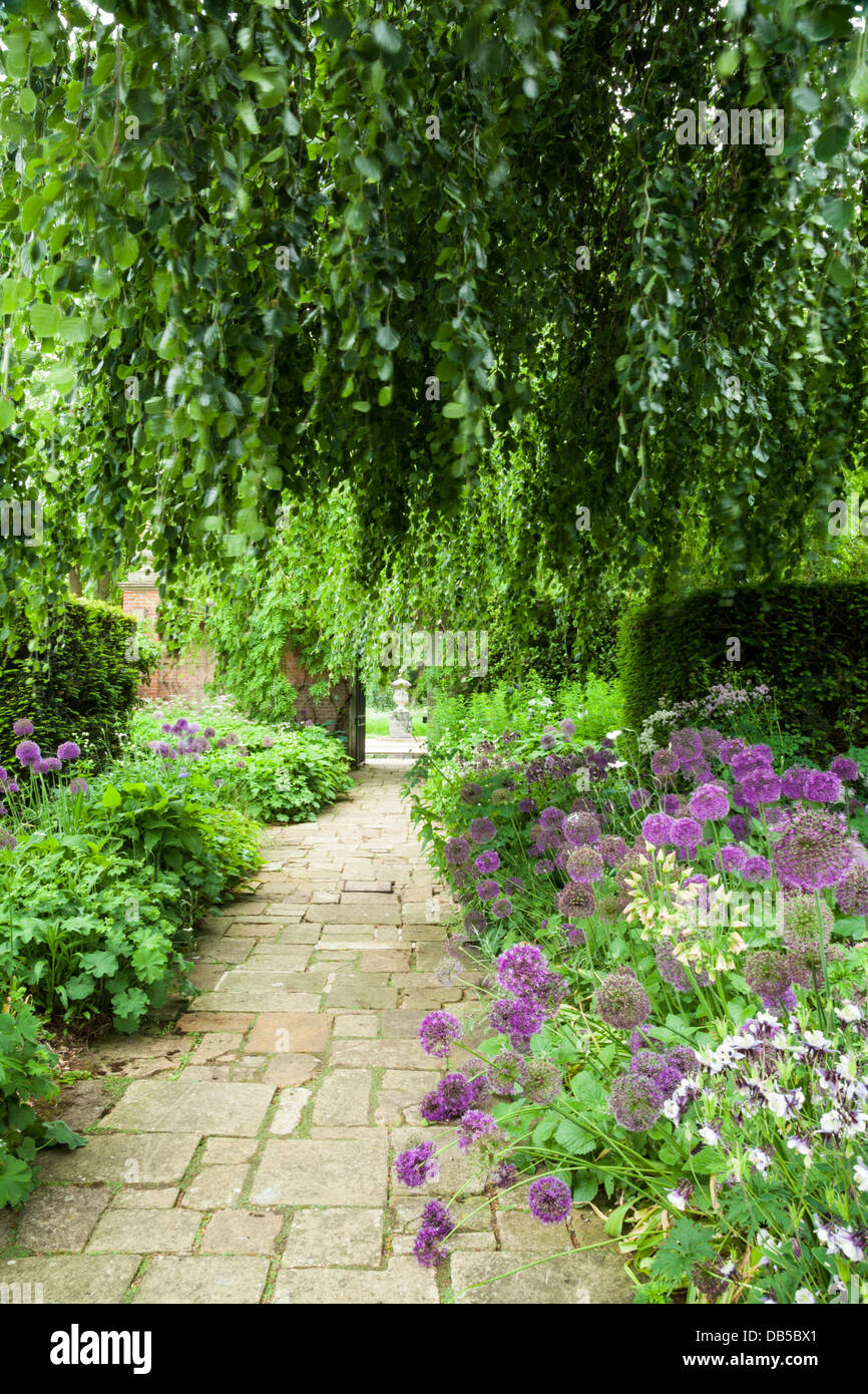 Stock Photo   The Early Summer Borders Of The Terrace Garden Framed By A  Weeping Beech Tree, Cottesbrooke Hall, Northamptonshire, England