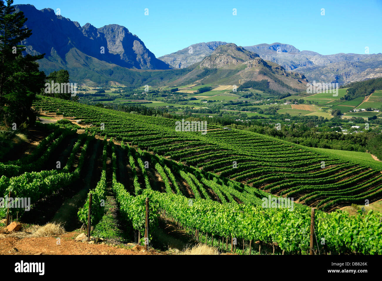 South africa winelands western cape cape winelands for Jardin winery south africa