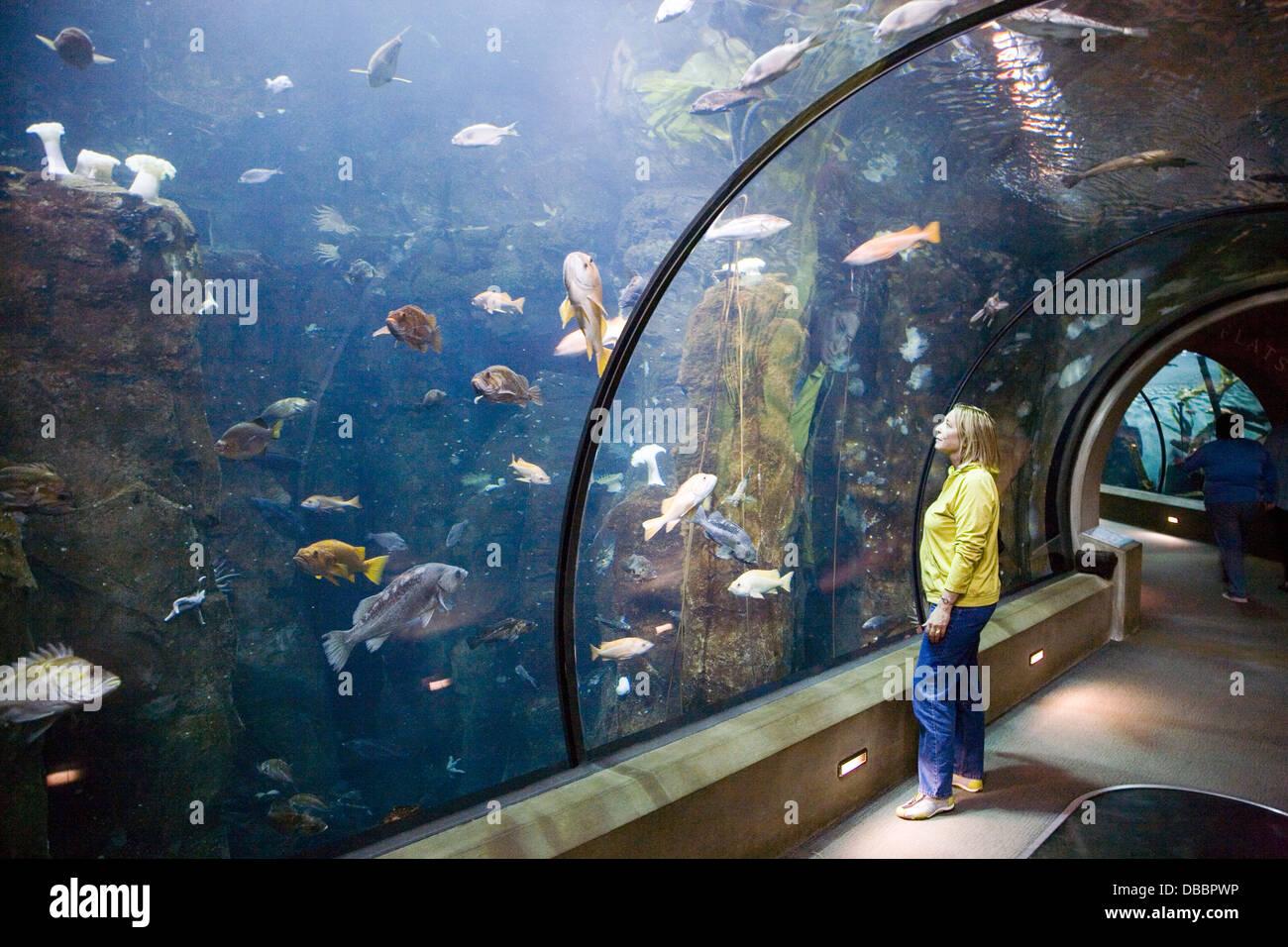 Passages Of The Deep At Oregon Coast Aquarium Newport