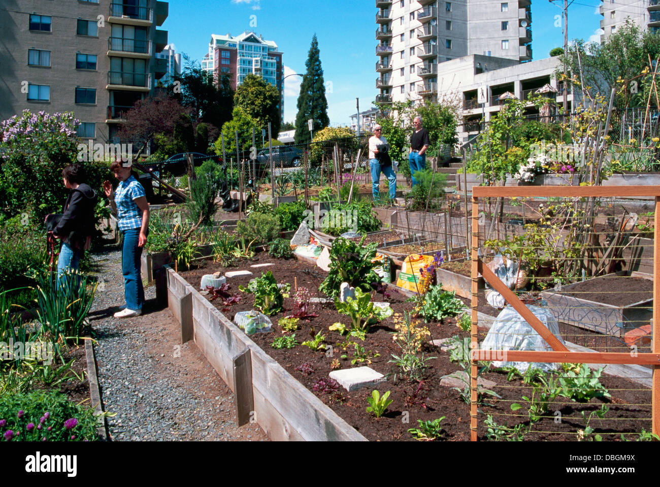 community garden urban gardens north vancouver bc british stock photo royalty free image. Black Bedroom Furniture Sets. Home Design Ideas