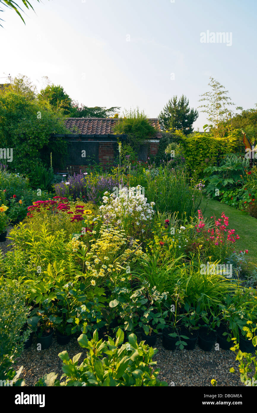 Typical English Garden Plants Flowers Densely Planted Borders