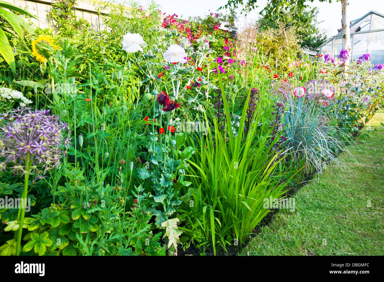 English garden plants typical english garden plants for Typical landscaping plants