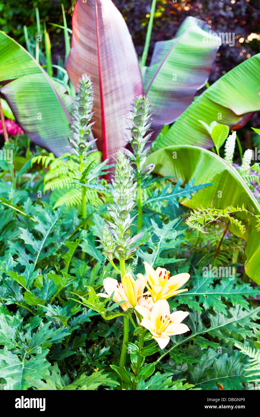 Typical english garden plants flowers acanthus spinosa and for Typical landscaping plants