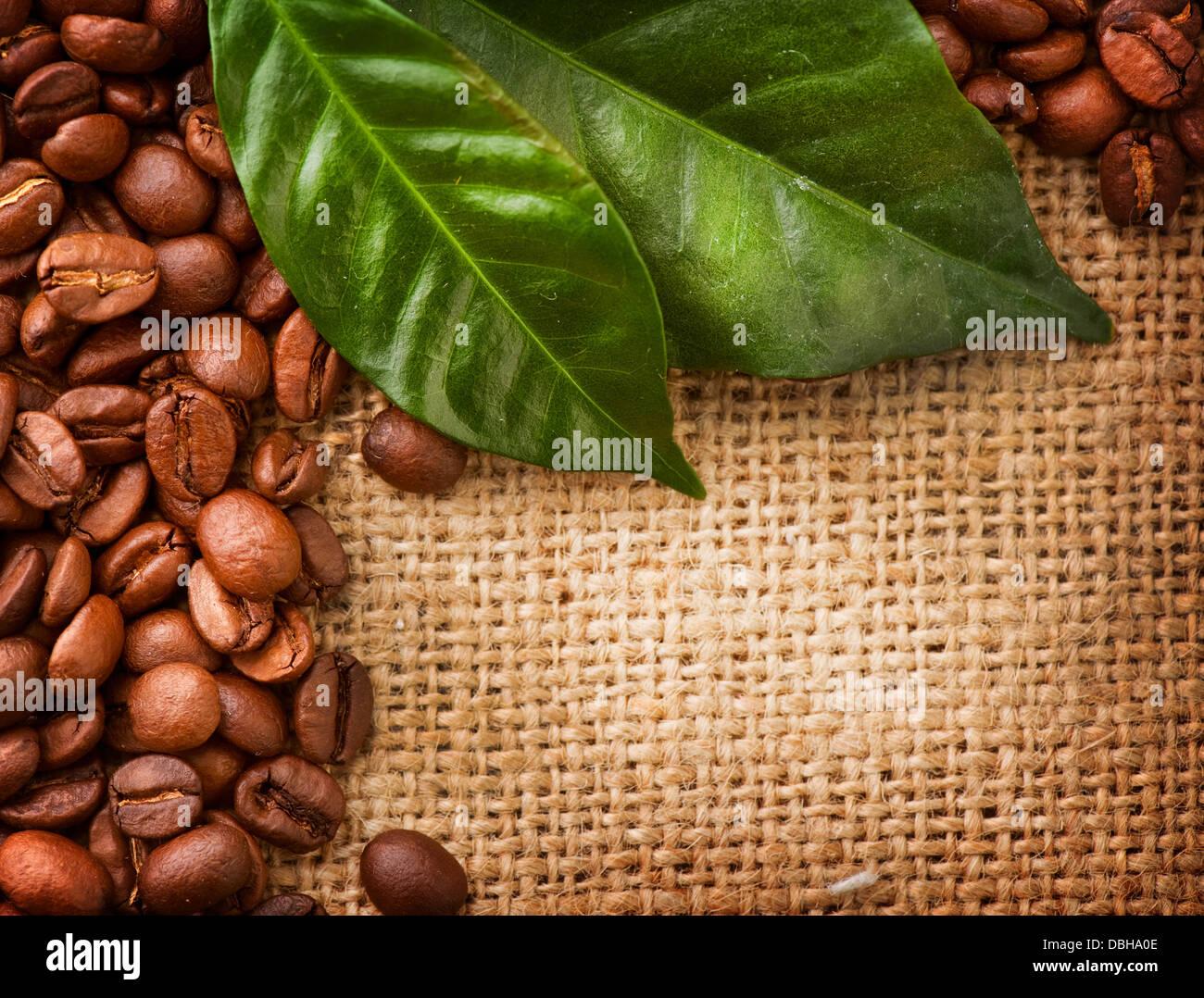Листья зеленые обои 4