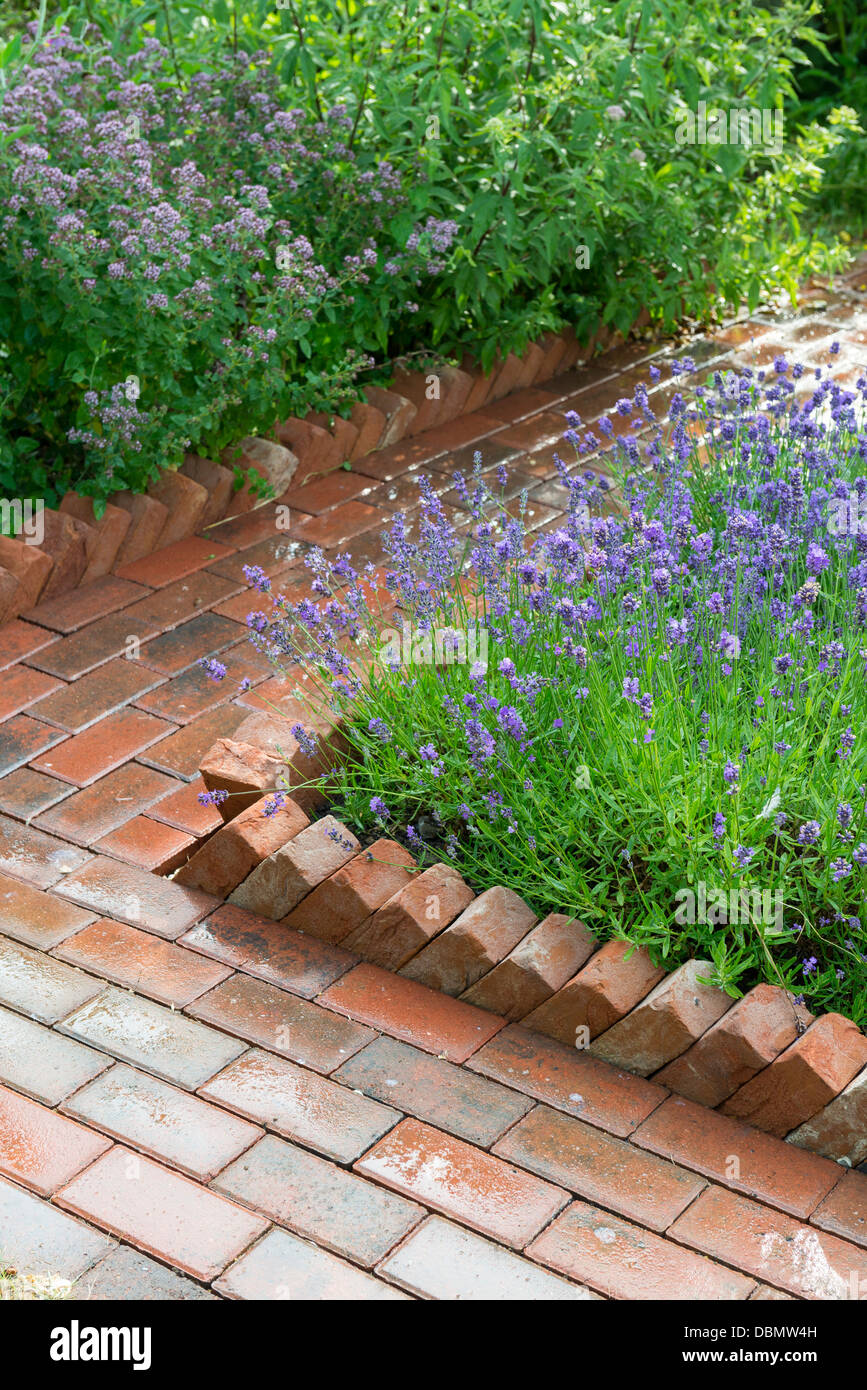 Garden Path Constructed From Concrete Pavers With A Saw Tooth Housebrick  Edging Bordering A Lavender Bed