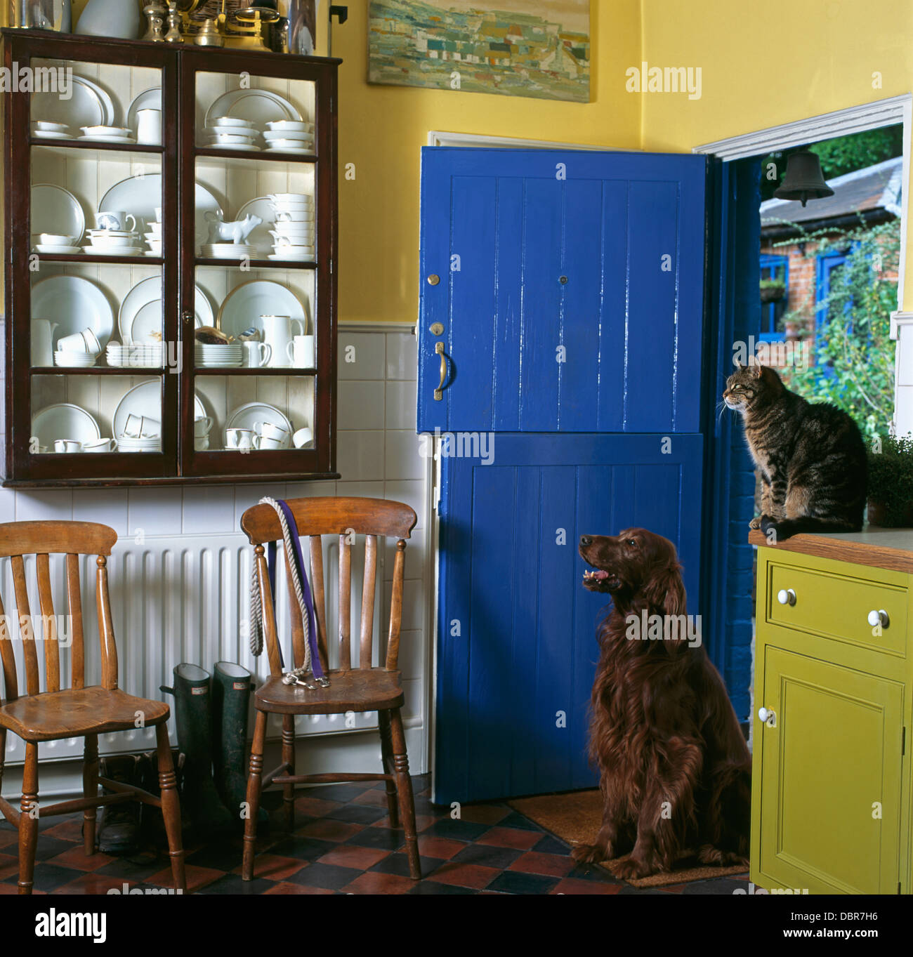 Kitchen Stable Doors: Cat And Dog In Country Kitchen With Blue Painted Stable