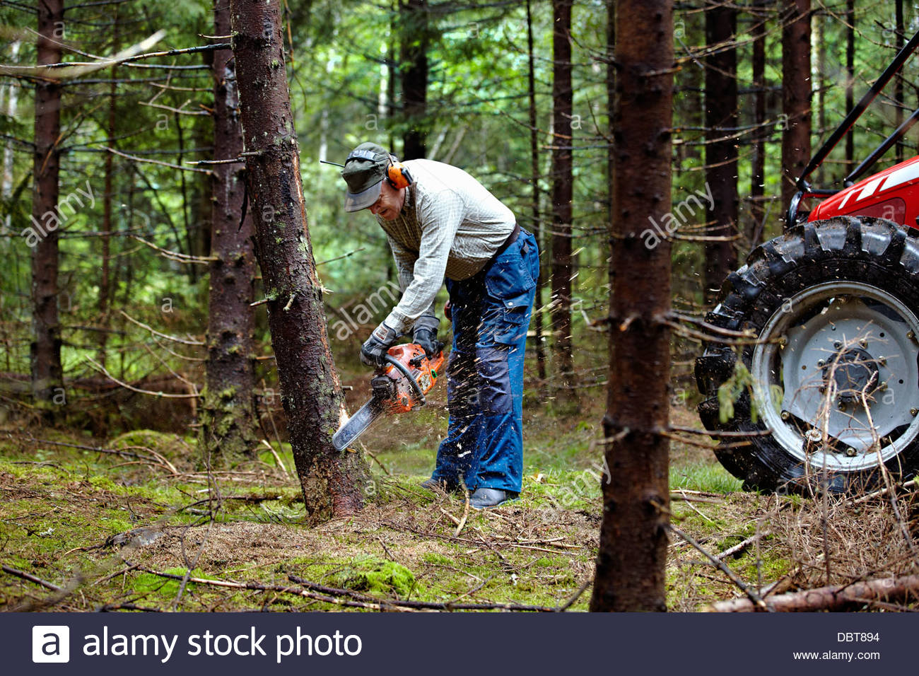 Tractor Man On Cutting Trees : Man cutting trees in forest with chain saw stock photo