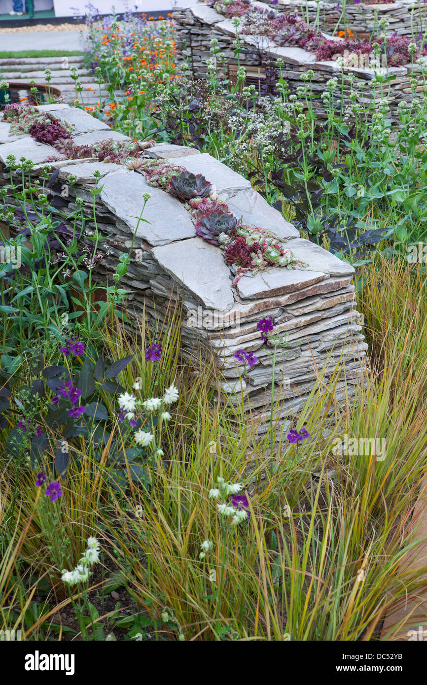 Dry stone wall with wildlife habitats and sempervivum inside