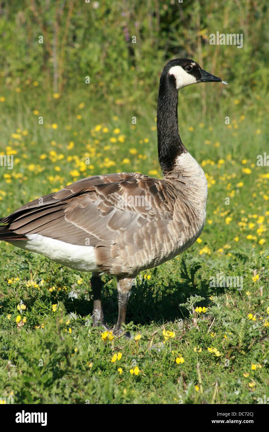 Buy Canada Goose In Winnipeg
