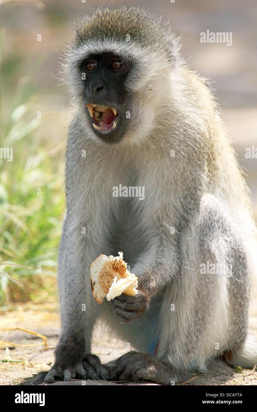 Old vs New (world monkeys) - The Jungle Nook