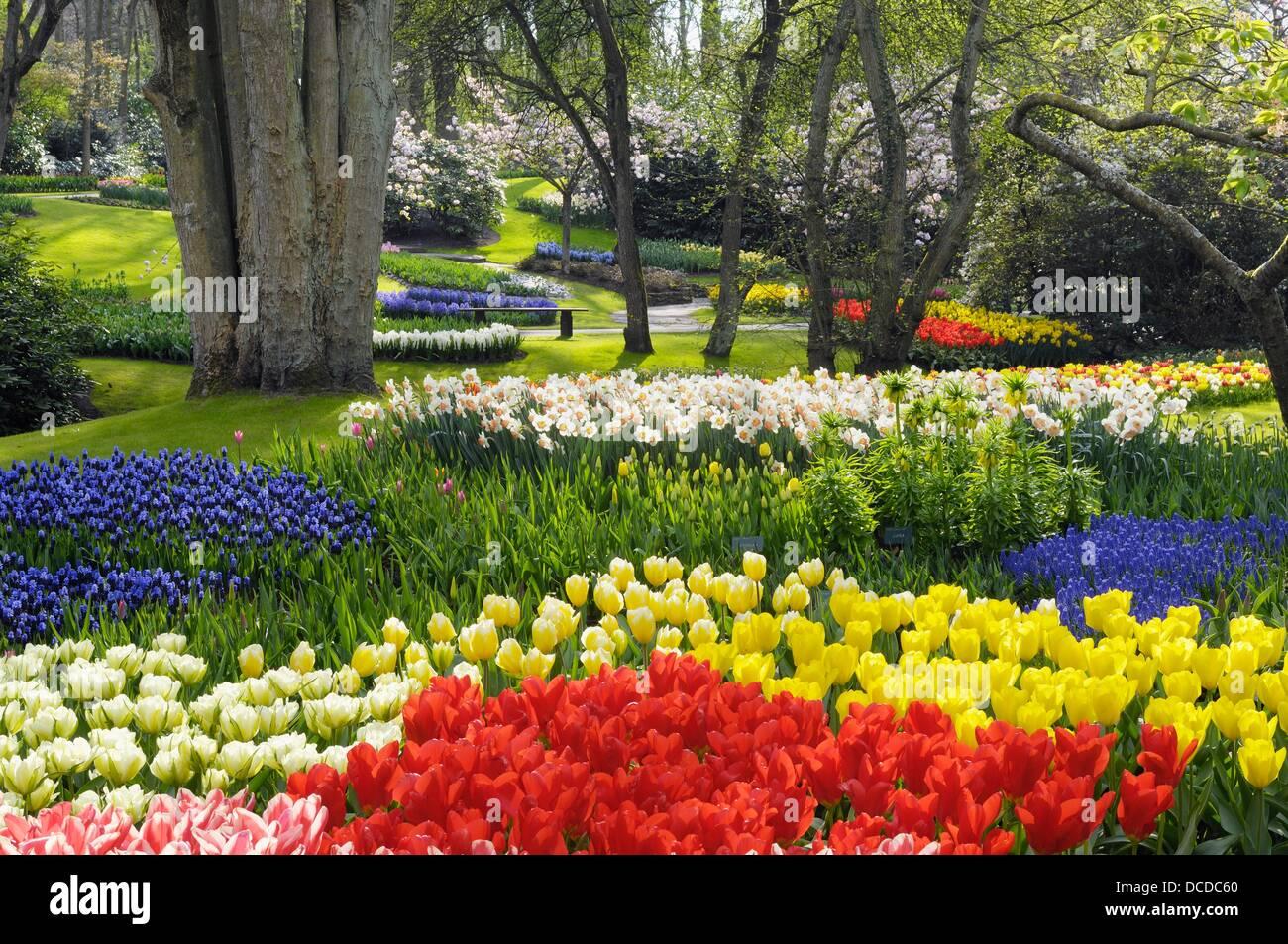 Formal Garden Design With Springtime Flowerbeds Of Tulips, Daffodils And  Hyacinths, Keukenhof Gardens, Lisse, Holland