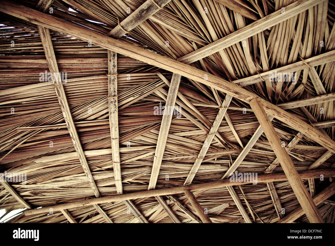 Stock Photo   Dried Palm Tree Leaves Palapa Roof And Beams View From Under
