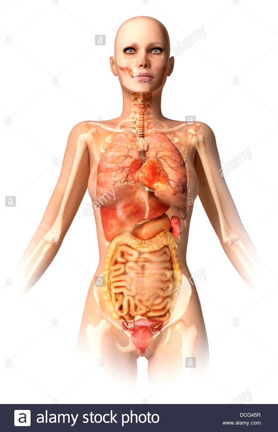 Anatomy of female body with bone skeleton and all internal organs ...