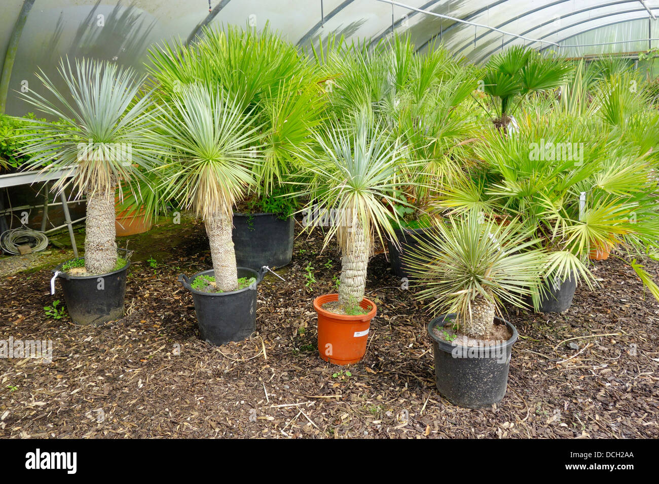 Are yucca trees native to the denver area aurora house for Small trees suitable for small gardens
