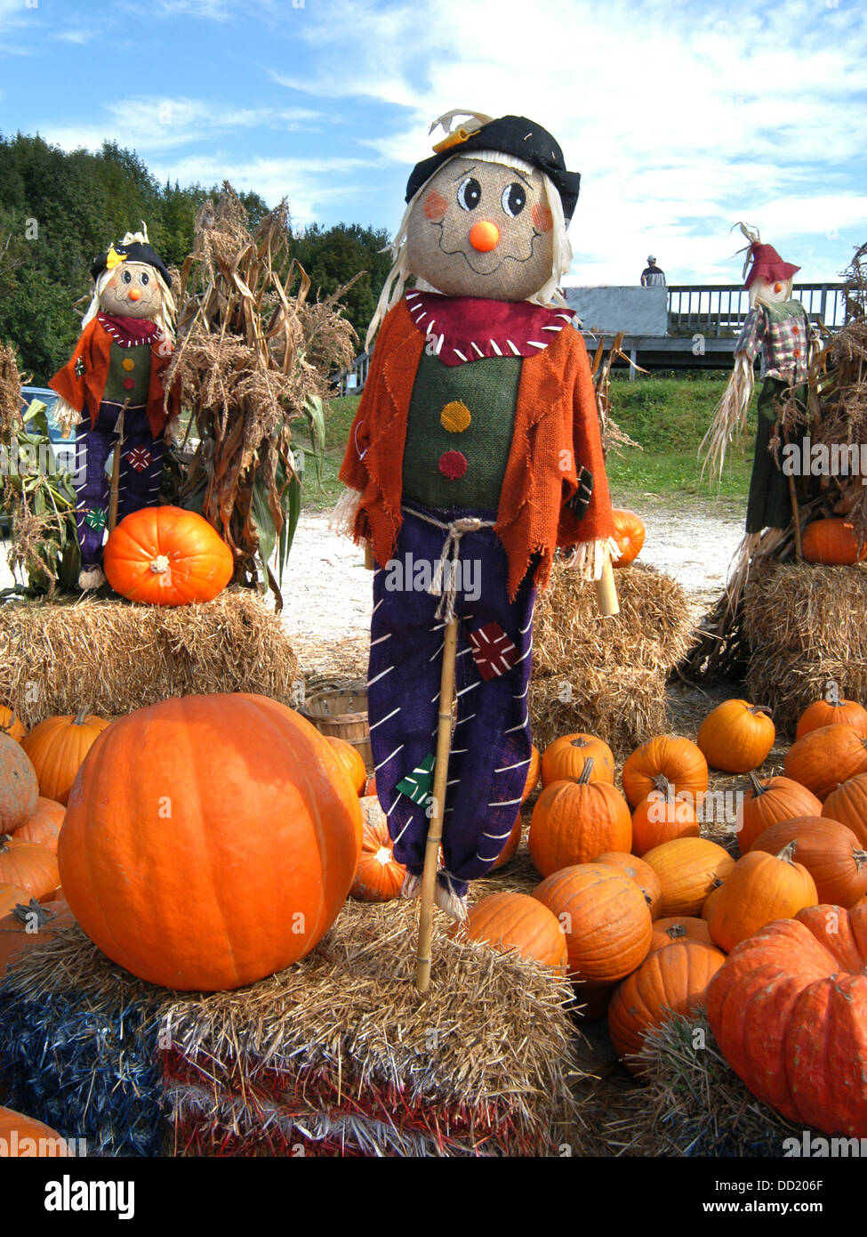 a halloween scarecrow take centre position amongst the pumpkin dsiplay at this new hampshire roadside garden - Halloween New Hampshire