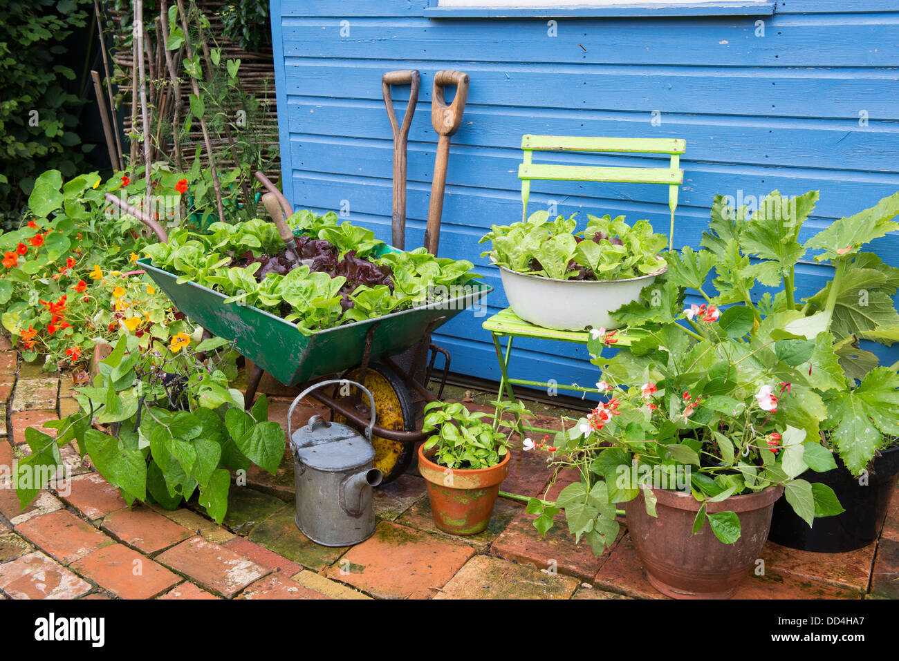 High Quality Small Garden Corner With Old Wheelbarrow And Old Enameled Bowl Planted With  Lettuce Varieties U0027Little