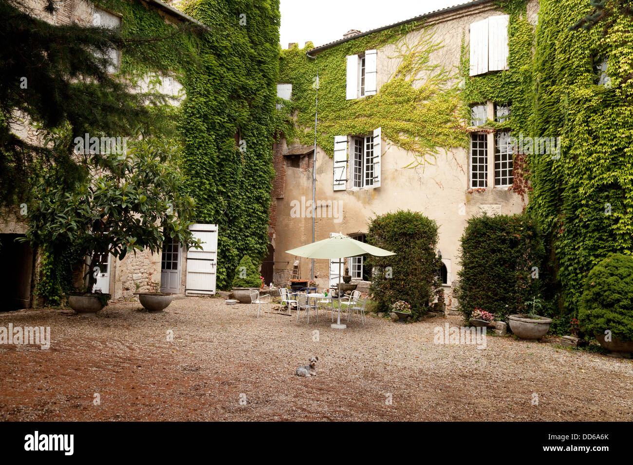 Courtyard Of A French House With Small Dog Agen France