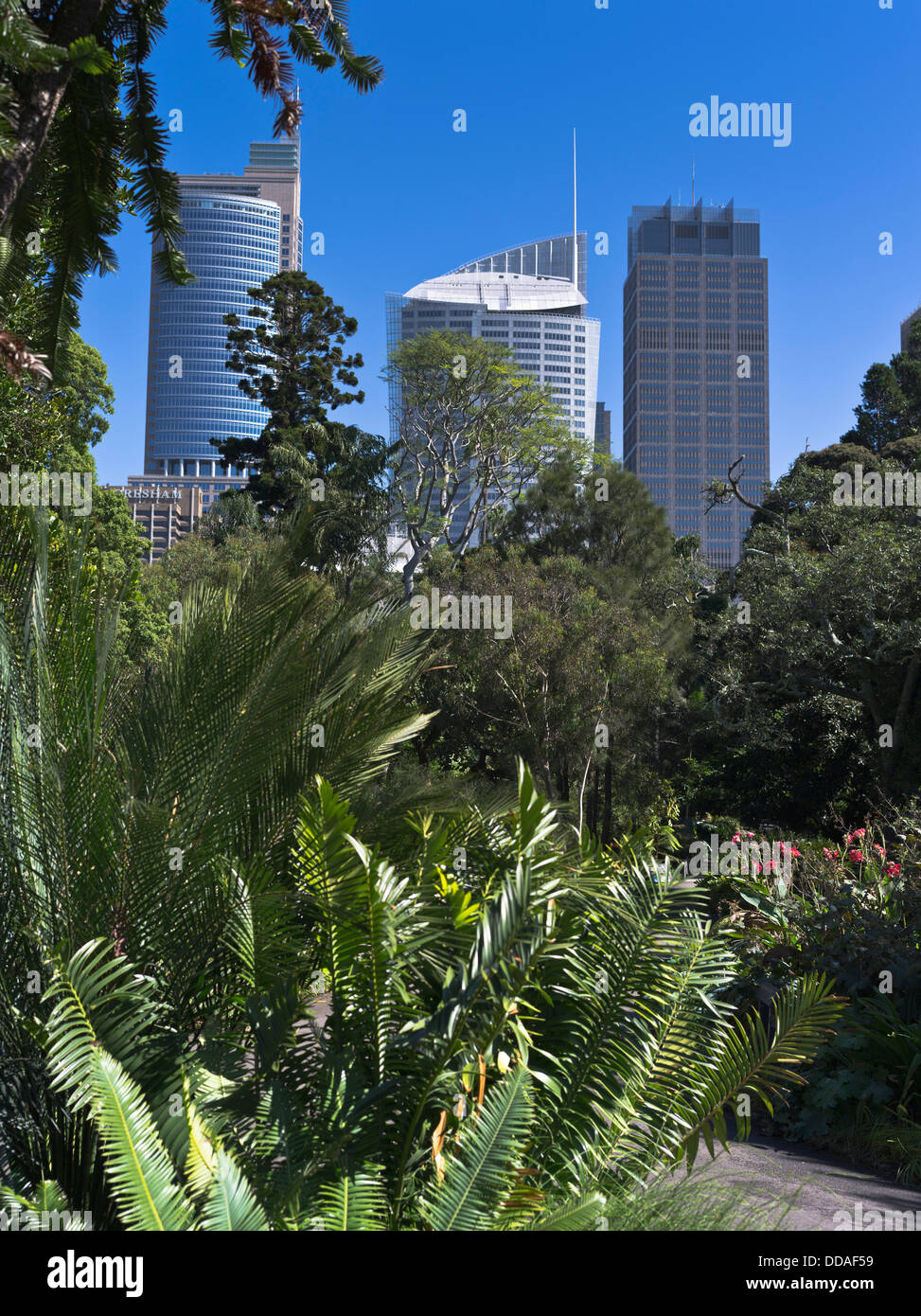 Dh Royal Botanic Gardens SYDNEY AUSTRALIA Tropical Park Central Business  District City Skyline Buildings
