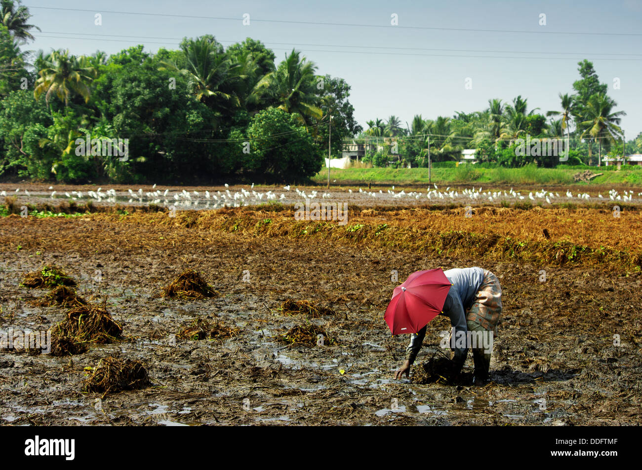 about farmers in india in hindi India has been taking steps to address the high number of farmers in india who are killing themselves the figures are shocking, but are they any higher than in india as a whole since the 1990s.
