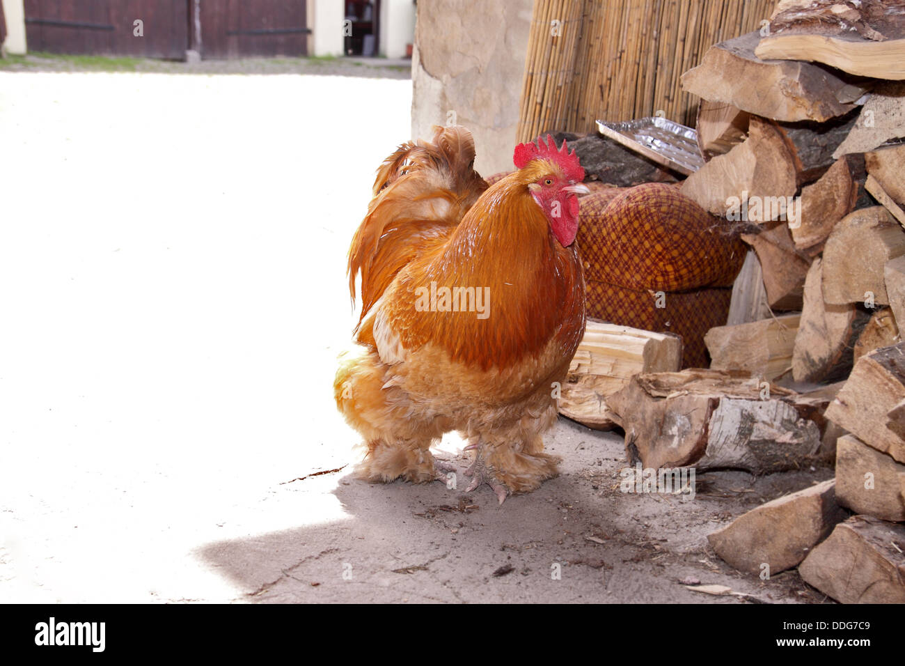 www big cock