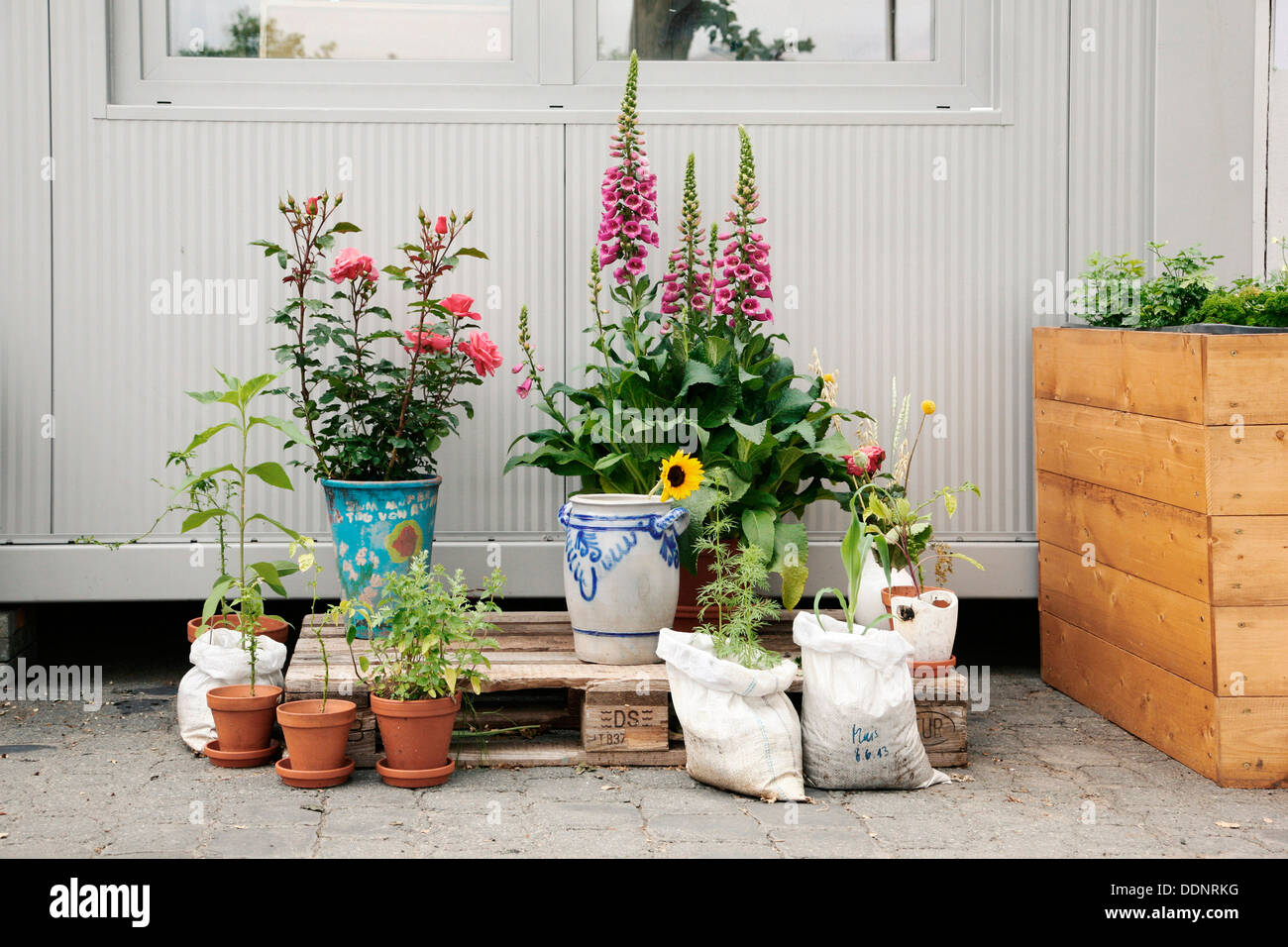 urban gardening frankfurt am main hesse germany europe stock photo royalty free image. Black Bedroom Furniture Sets. Home Design Ideas