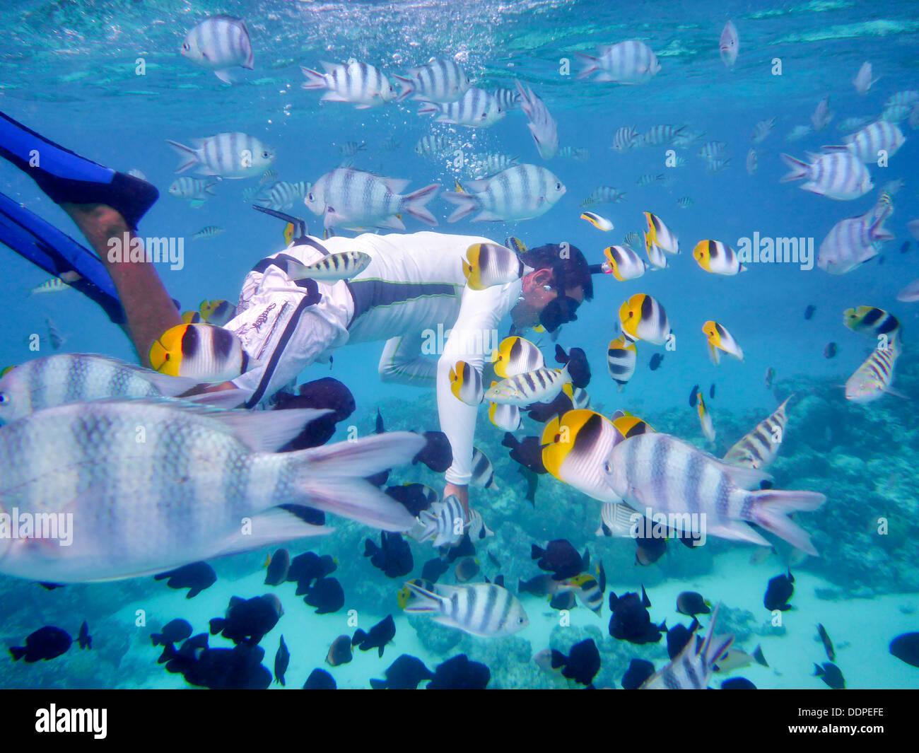 Snorkel divers with tropical fish bora bora french for Bora bora fish