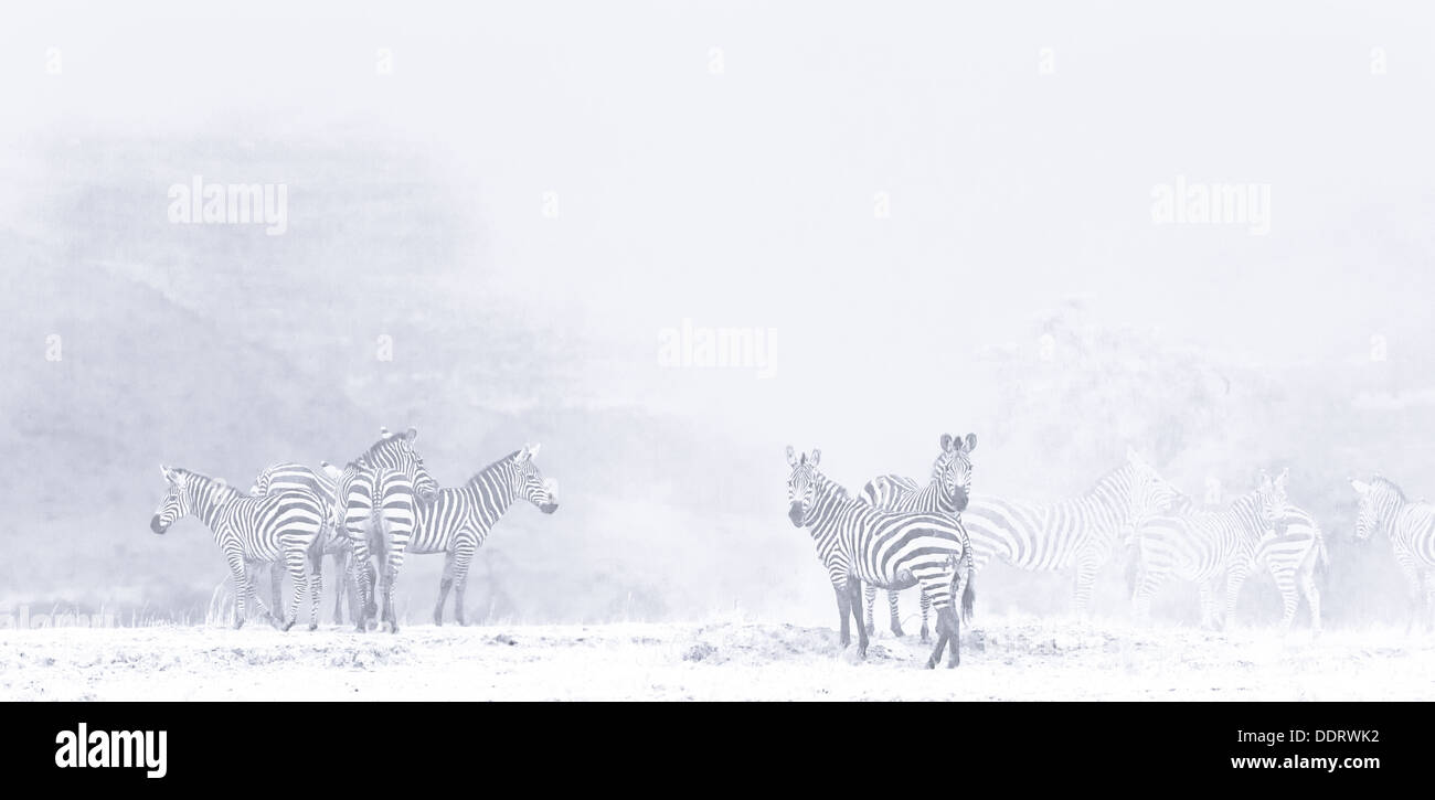 high key panorama of herd of zebra standing on lake bed of