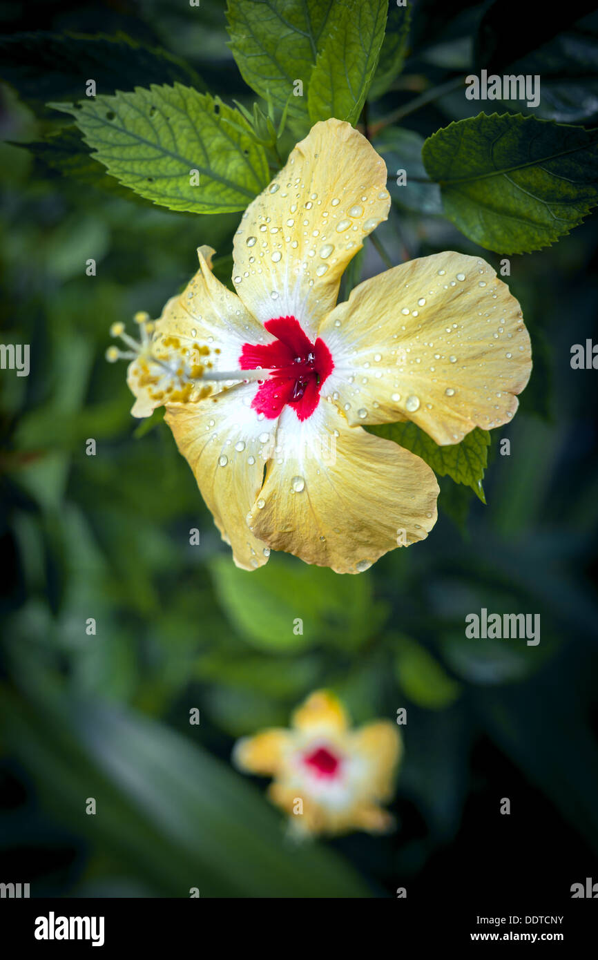 Yellow Flower With Center Stock Images Royalty Free Jzgreentown