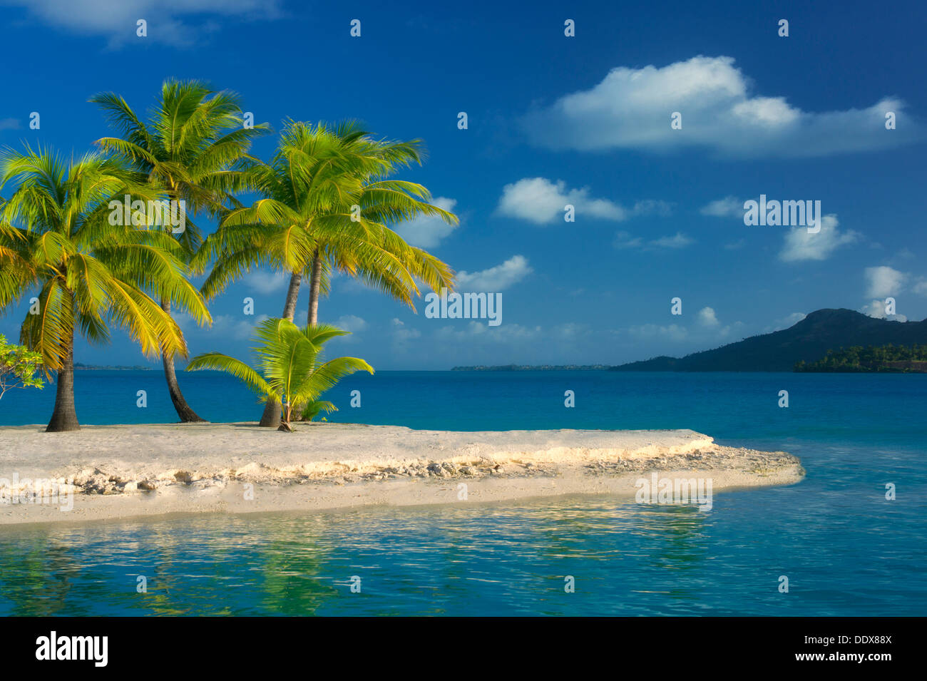 Beach with palm trees bora bora french polynesia stock for What to buy in bora bora