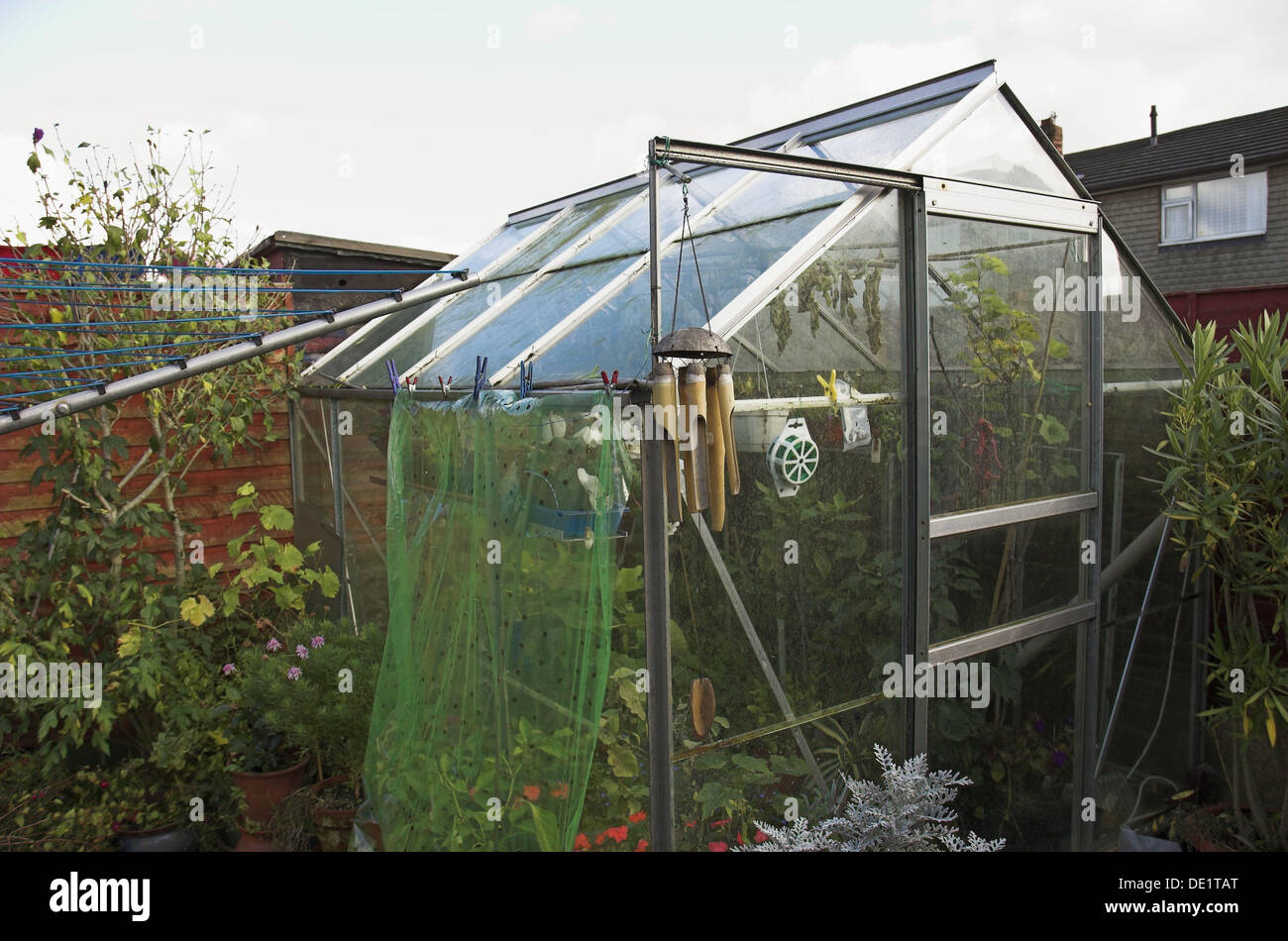 Backyard, Greenhouse, Green, House, Glass, Glasshouse, Micro Climate,  Growing