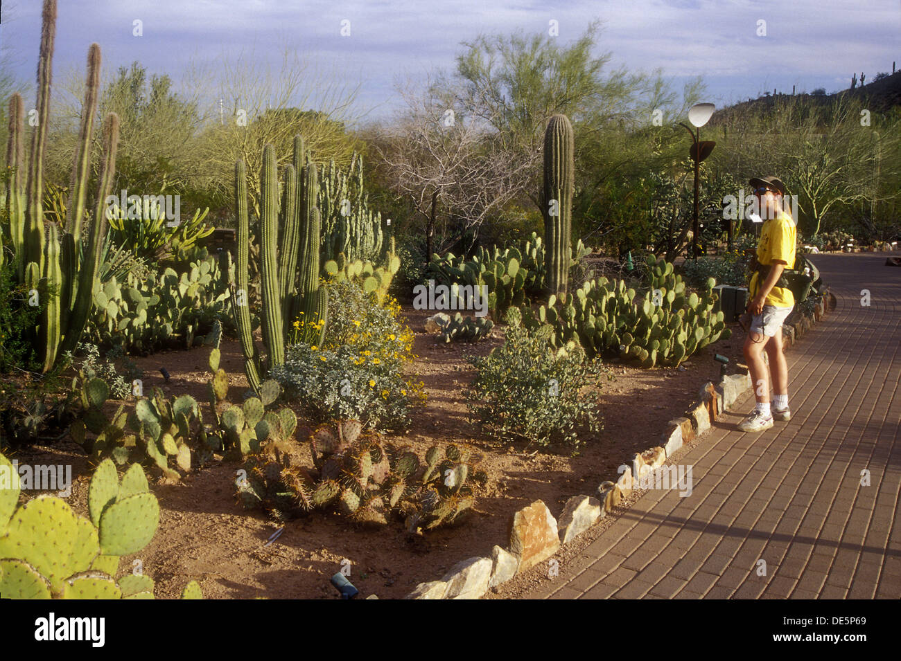 Charmant Cactus Garden, Desert Botanical Garden, Papago Park, Phoenix, Arizona, USA