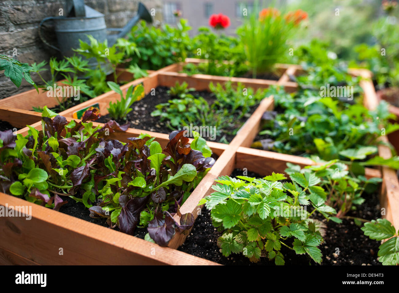 Square Foot Gardening By Planting Flowers, Herbs And Vegetables In Wooden  Box On Balcony