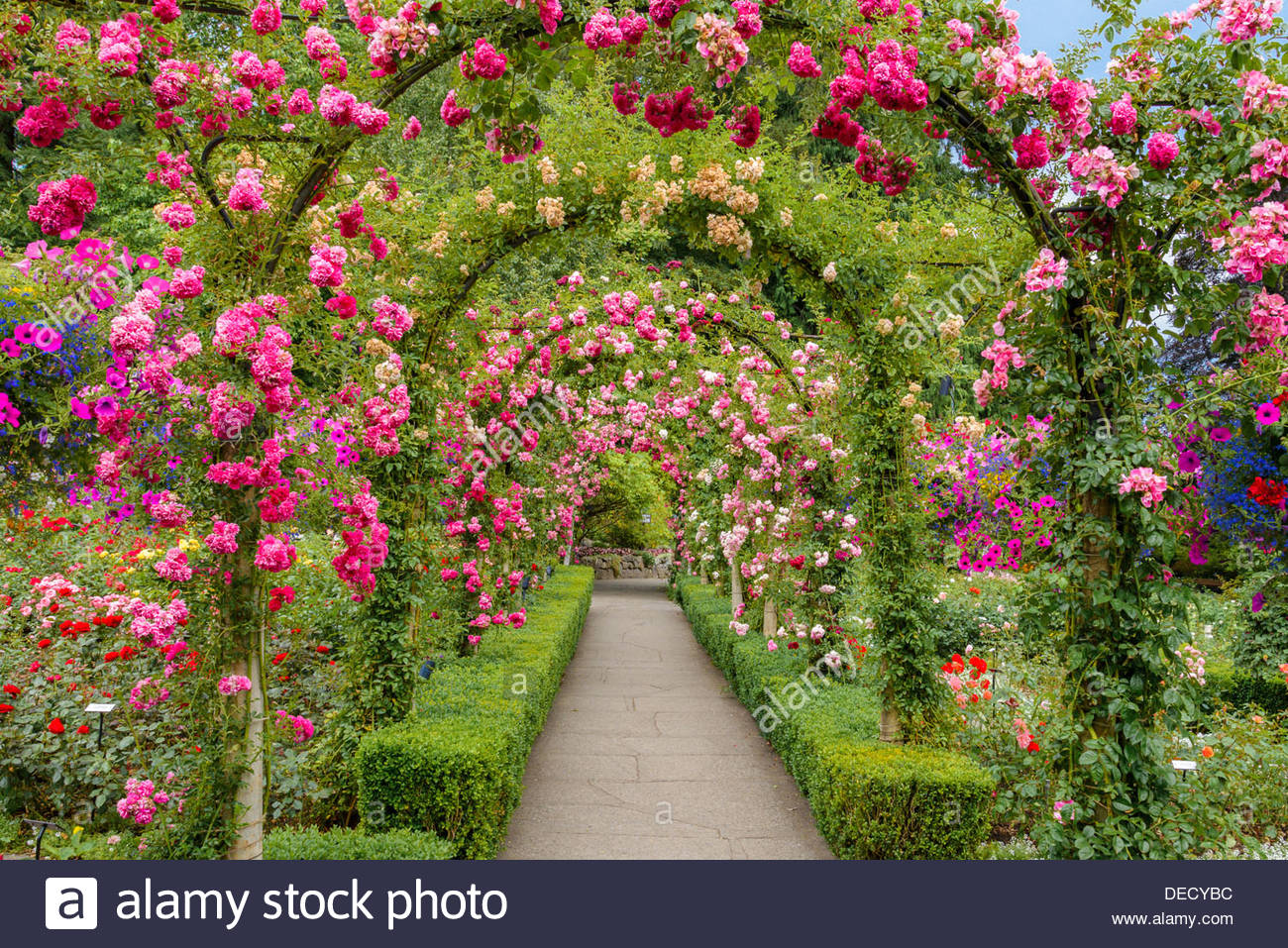 The rose garden butchart gardens brentwood bay near victoria the rose garden butchart gardens brentwood bay near victoria vancouver island british columbia canada thecheapjerseys Choice Image