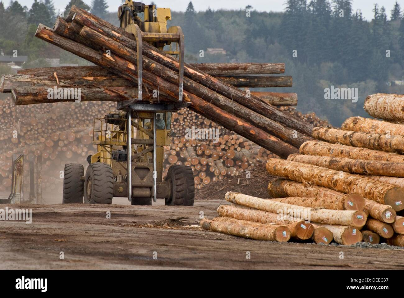 Massive logging machine moving logs at lumber mill coos for Mill log