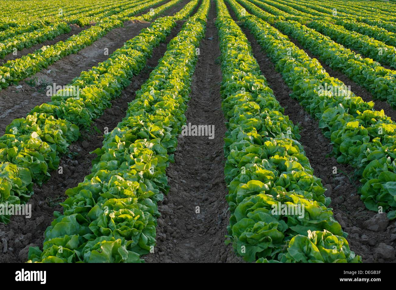 intensive farming Intensive agriculture can contaminate water and soil [and] damage biodiversity, while more traditional or extensive farming systems generally bring benefits to biodiversity, landscape, soil and.