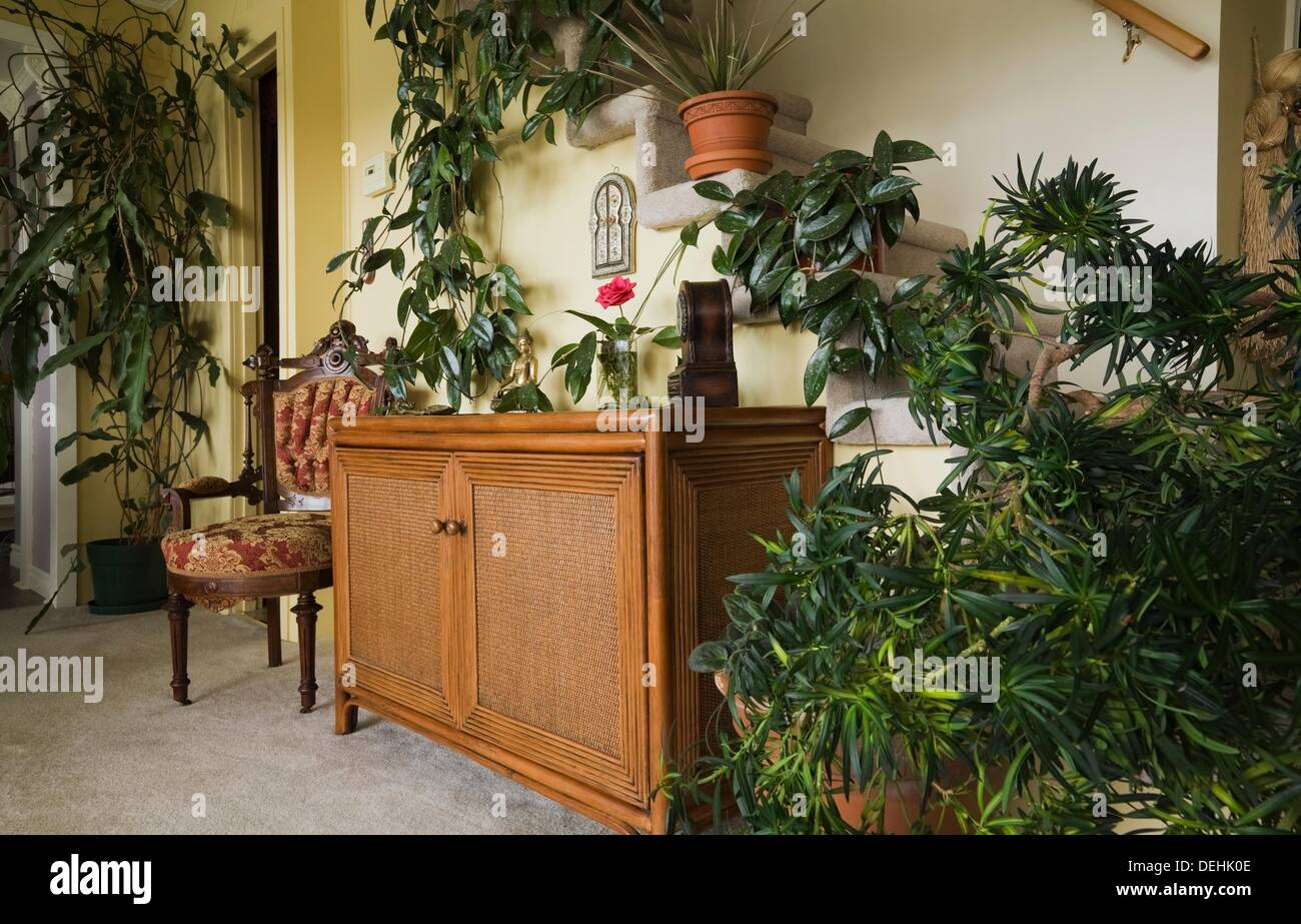 Antique upholstered chair and wicker cabinet with house plants in ...