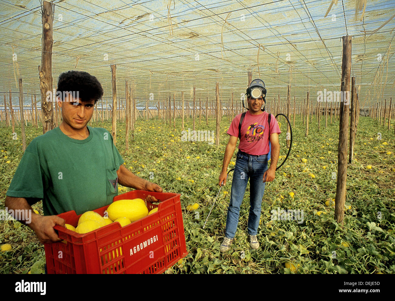 Maghribian workers in the greenhouses el ejido almer a - El ejido almeria ...