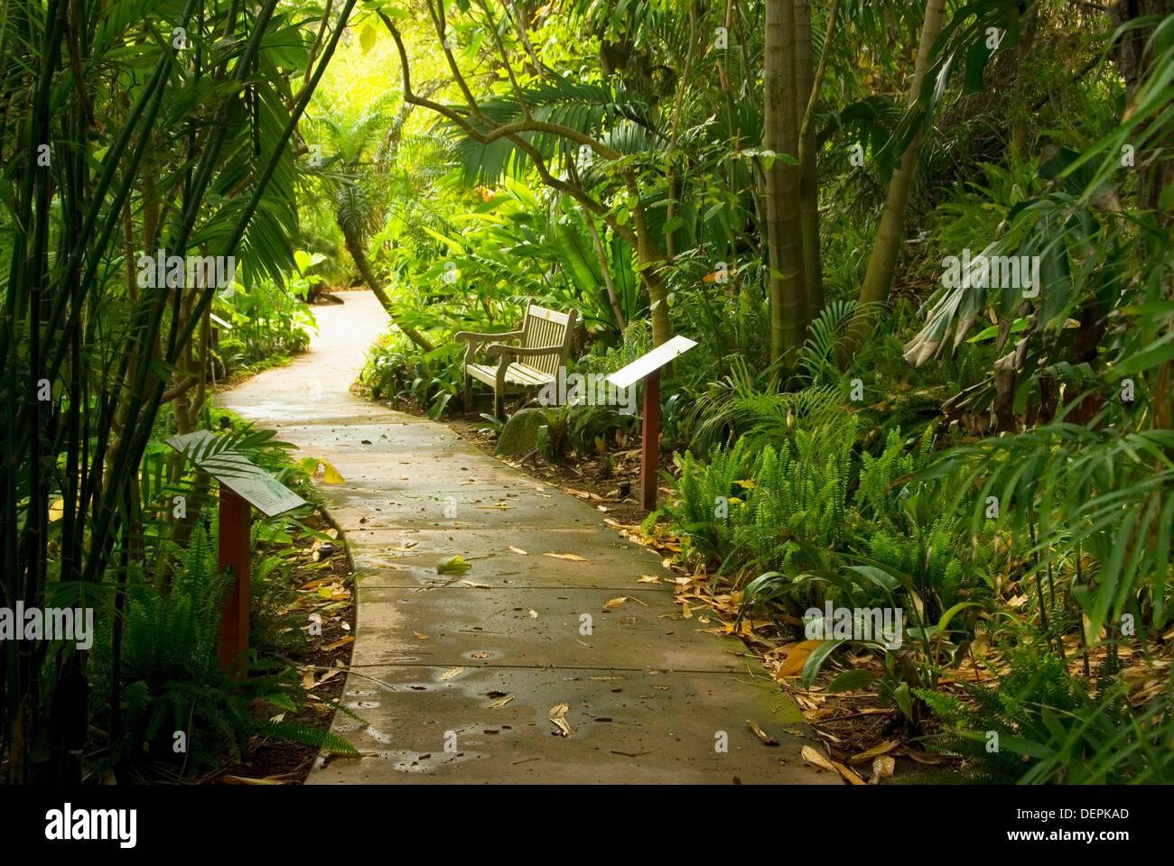 Path Through Tropical Rain Forest Garden, San Diego Botanic Garden,  California