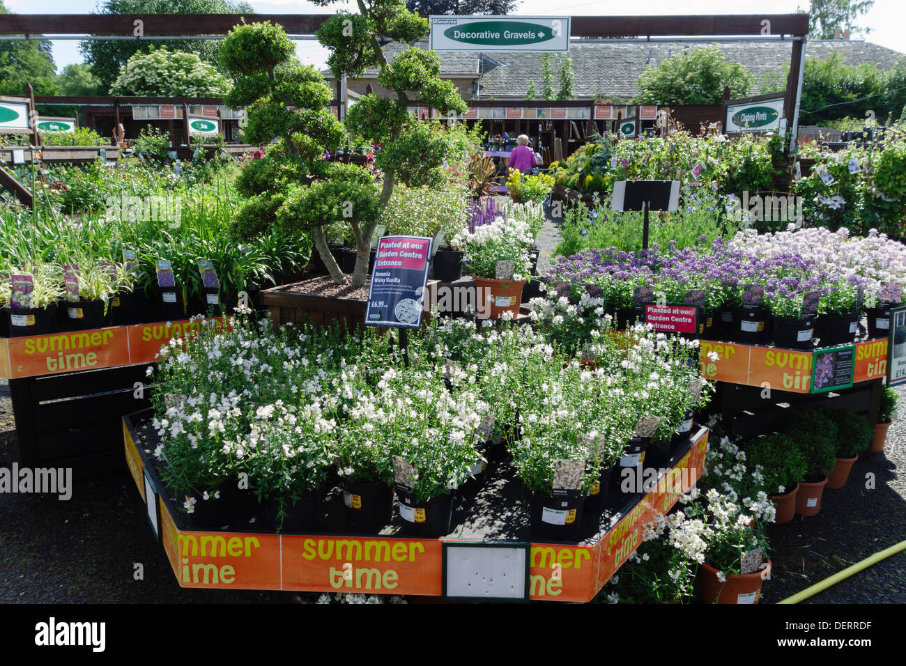 Pretty Outdoor Bedding Plants For Sale In A Garden Centre Uk Midsummer  With Fair Outdoor Bedding Plants For Sale In A Garden Centre Uk Midsummer With Charming Garden Art Statues Also Garden Sale Clearance In Addition Revolution Parsonage Gardens And Garden Awnings And Sails As Well As Maggots In Garden Additionally Bespoke Jewellery Hatton Garden From Alamycom With   Charming Outdoor Bedding Plants For Sale In A Garden Centre Uk Midsummer  With Pretty Garden Awnings And Sails As Well As Maggots In Garden Additionally Bespoke Jewellery Hatton Garden And Fair Outdoor Bedding Plants For Sale In A Garden Centre Uk Midsummer Via Alamycom